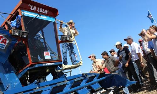 Con La Lola, el INTA cosecha un kilo de algodón por segundo