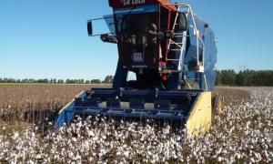 La Lola cosechadora de algodon