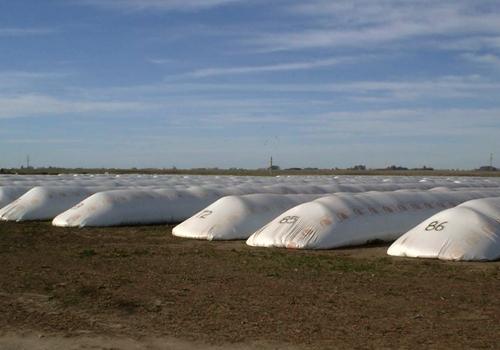 Almacenamiento de granos: temperatura y humedad, la clave