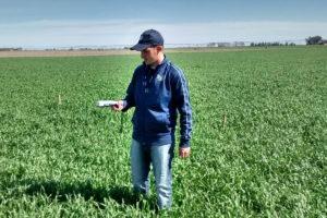 inta-sensor-para-calcular-rendimiento-del-trigo