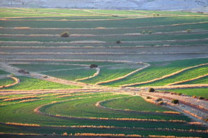 agricultura-en-sudafrica