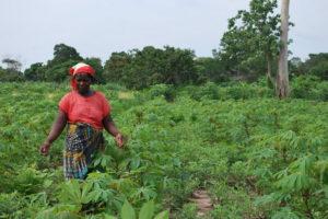 mozambique-plantaciones-agricolas