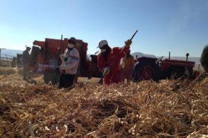 trabajos-agricolas-en-sudafrica